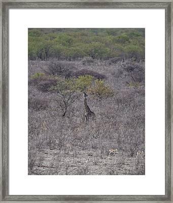 Afternoon Treat Framed Print by Ernie Echols