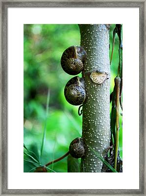 #aftertheyhavereignedtheywillrest Framed Print by Becky Furgason