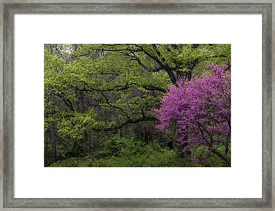 Framed Print featuring the photograph Afton Virginia Spring Red Bud by Kevin Blackburn