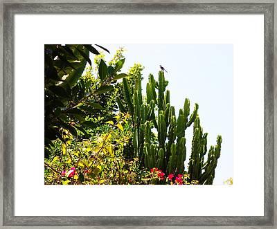 ..again All Odds.... Framed Print by Adolfo hector Penas alvarado