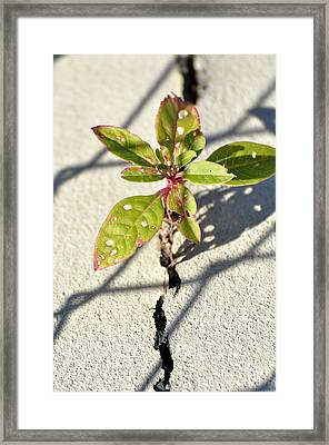 Against All Odds Framed Print by Jan Amiss Photography