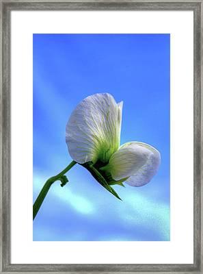 Against The Blue Framed Print by Richard Stephen