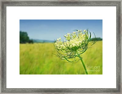 Against The Blue Sky Framed Print by Sandra Cunningham