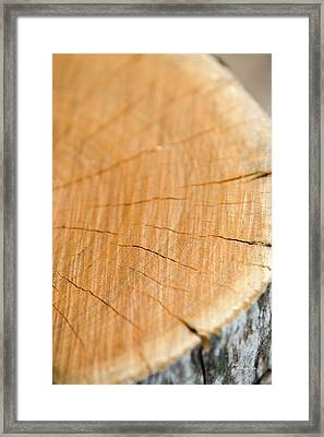 Framed Print featuring the photograph Against The Grain by Christina Rollo