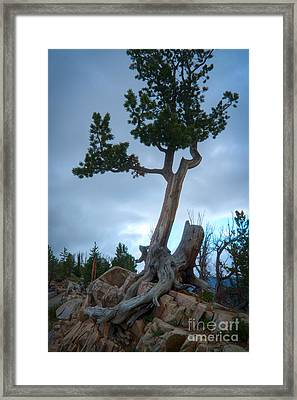 Against The Odds Framed Print by Idaho Scenic Images Linda Lantzy