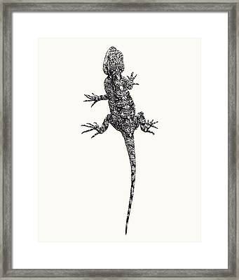 Agama Lizard In Graphic Monochrome Framed Print