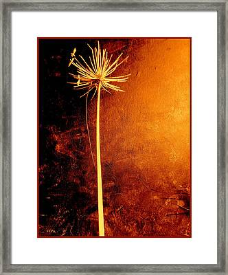 Agapanthus After The Storm Framed Print