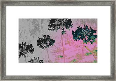 Agapanthus Black And White Framed Print by Su Short