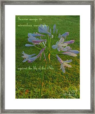 Agapanthus Dawn Framed Print by ARTography by Pamela Smale Williams