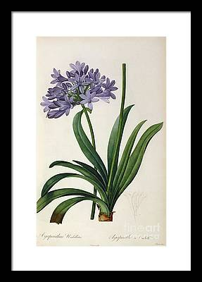 Purple Framed Prints
