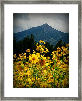 Agassiz Peak High Above The Meadow Framed Print