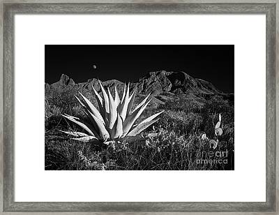 Agave And Moonrise Framed Print