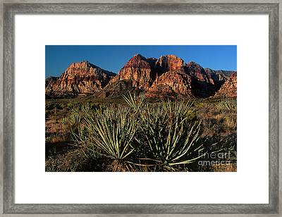 Agave Below Wilson Cliffs Red Rock Canyon National Conservation Area Nevada Framed Print by Dave Welling