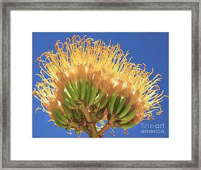 Agave Bloom Framed Print