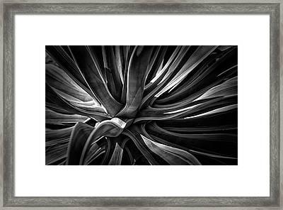 Agave Burst Framed Print