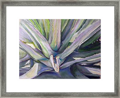 Agave Framed Print by Carole Haslock