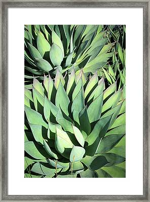 Framed Print featuring the photograph Agave by Catherine Lau