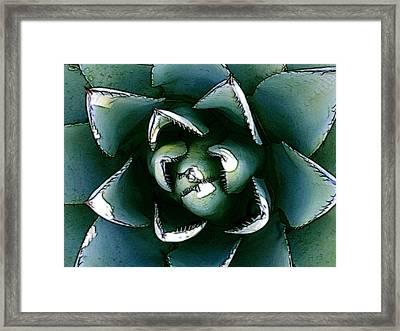 Agave Century Cactus Framed Print by Kathleen Stephens