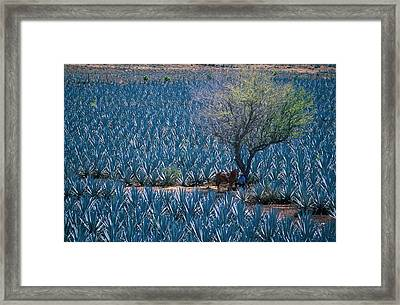 Agave Framed Print by Christian Heeb
