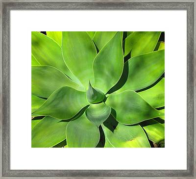 Agave Delight Framed Print by Candace Garcia