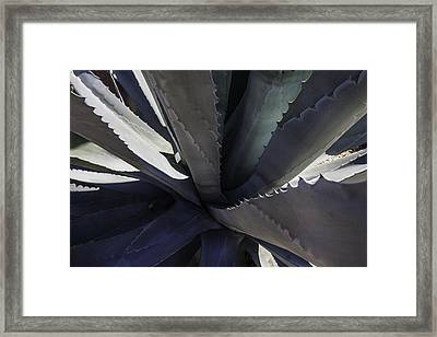 Agave Detail Framed Print