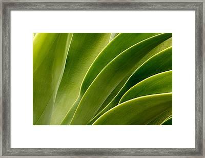 Agave Framed Print by Eric Foltz