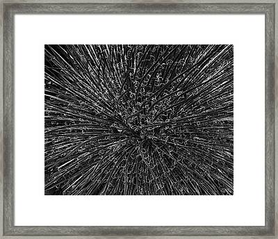 Agave I Bw Framed Print by David Gordon