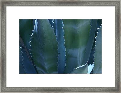 Agave Framed Print by Jerry Cave
