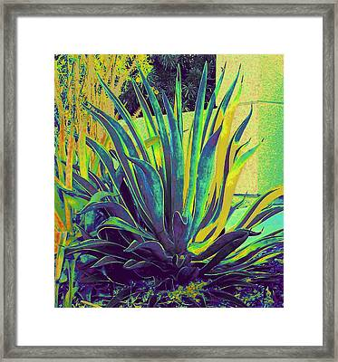 Agave Maria Framed Print by Randall Weidner