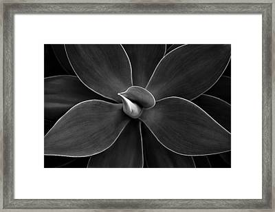 Agave Leaves Detail Framed Print by Marilyn Hunt