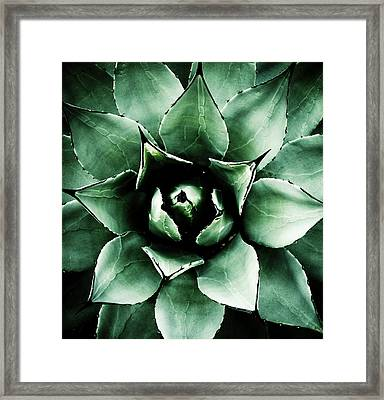 Agave Parryi Framed Print