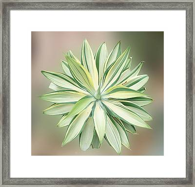 Agave Plant Framed Print by Art Spectrum