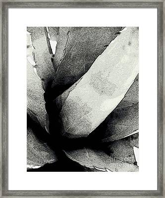 Agave Portrait Framed Print by Linda Parker