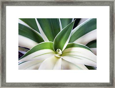 Framed Print featuring the photograph Agave Ray Of Light by Catherine Lau