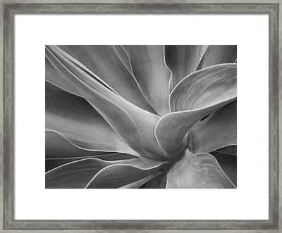 Agave Shadows And Light Framed Print