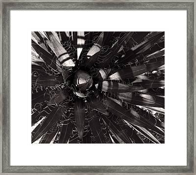 Agave Framed Print by Steve Bisgrove