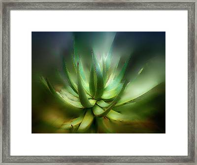 Agave Sunrise Framed Print by Joseph Hollingsworth