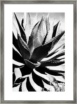 Agave Framed Print by Thomas R Fletcher