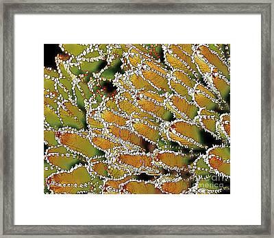 Agave-victoriae Reginae -2 Framed Print by Linda Parker
