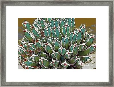 Agave-victoriae Reginae Framed Print by Linda Parker