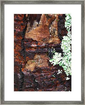 Age Scars Nor Attacks Can Mar Her Beauty Framed Print by Terrance DePietro