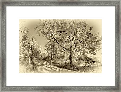Aged Beauty 3 - Sepia Framed Print