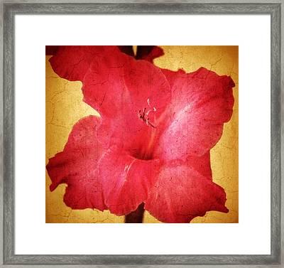 Aged Gladiola  Framed Print by Cathie Tyler