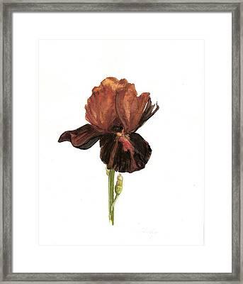 Aged Framed Print by Susan Tilley