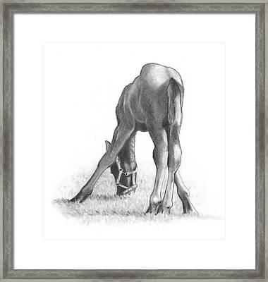 Agility Framed Print by Joyce Geleynse
