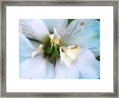 Aging Blossom Framed Print by Ward Smith