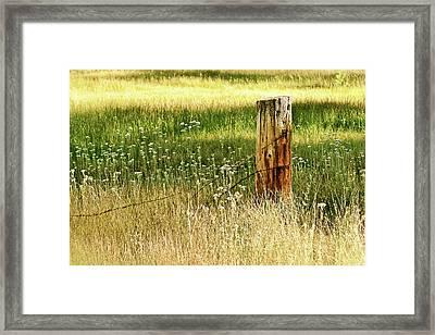 Aglow Framed Print