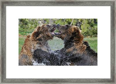 Agree To Disagree Framed Print by Sandra Bronstein