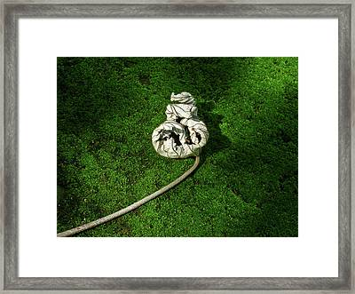 Aguished Leaf Framed Print by Douglas Barnett