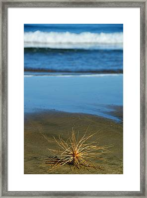 Ahipara Tumbleweed Framed Print by Helen Worley